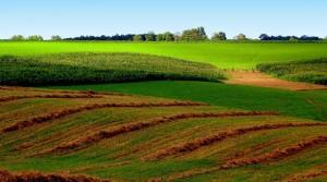 farm-land-300x167
